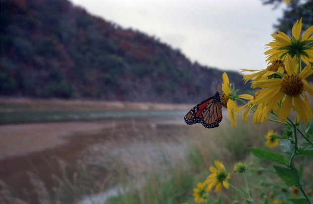 butterfly at Colorado Bend State Park, Texas