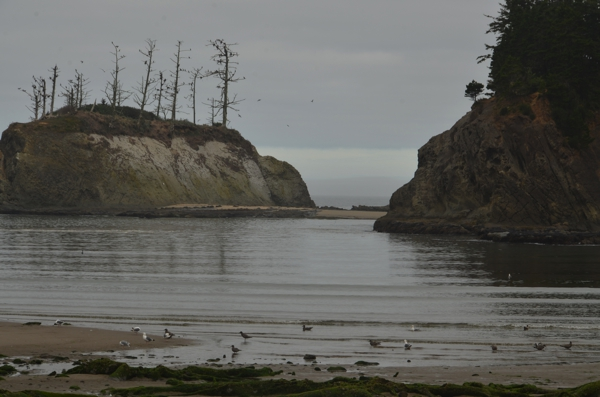 The beach at Sunset Bay Sate Park in Oregon