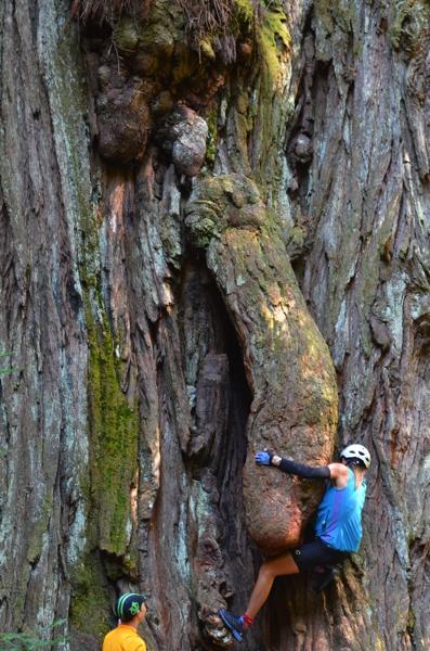 … climbing the trunk's junk