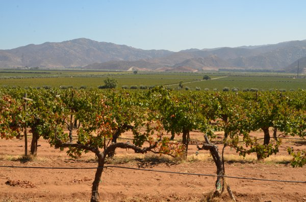 Baja's wine country