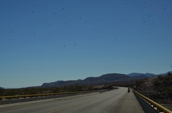 Birds above, great pavement below