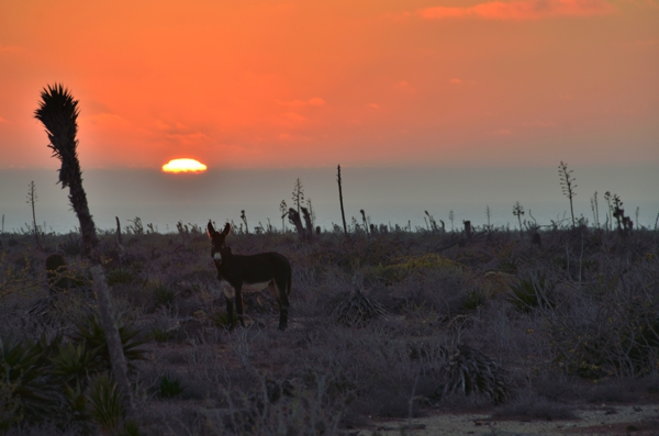 What's not to love, when there is a donkey in the sunset?