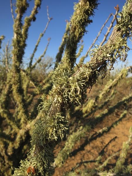Moss in the desert