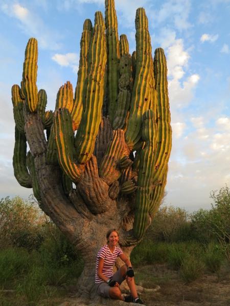 A scary big cactus …