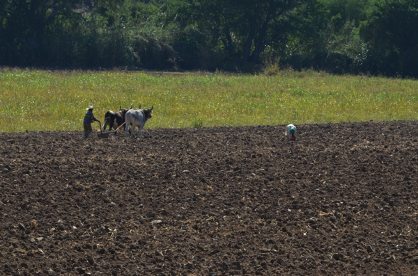 Much of the plowing and harvesting are still done by hand and with livestock.