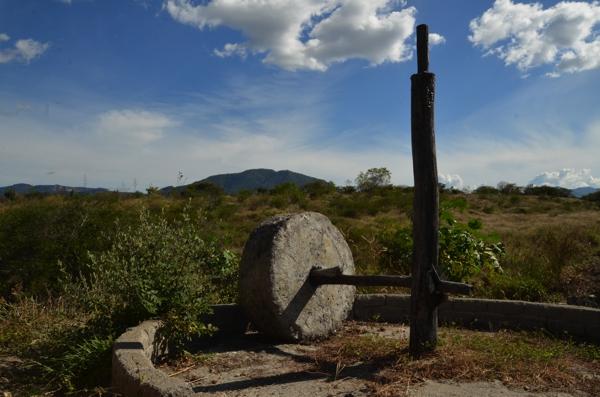 Wheel for crushing the piñas