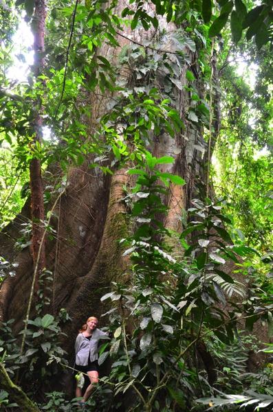 Heather & a giant tree