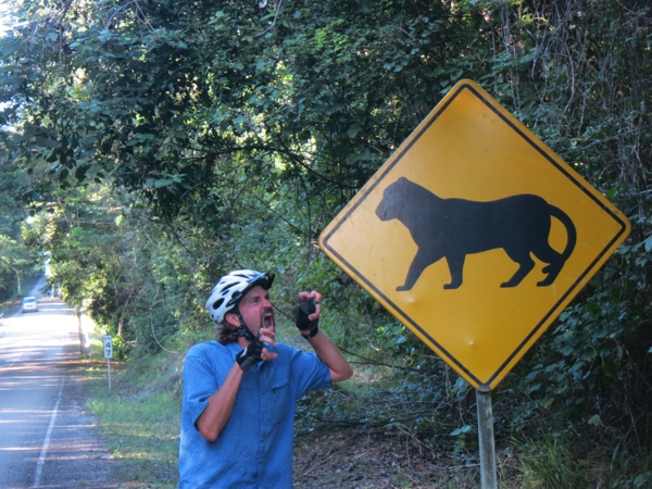 Road crossing signs for slightly dysmorphic jaguars