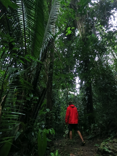 Early morning walk through the jungle