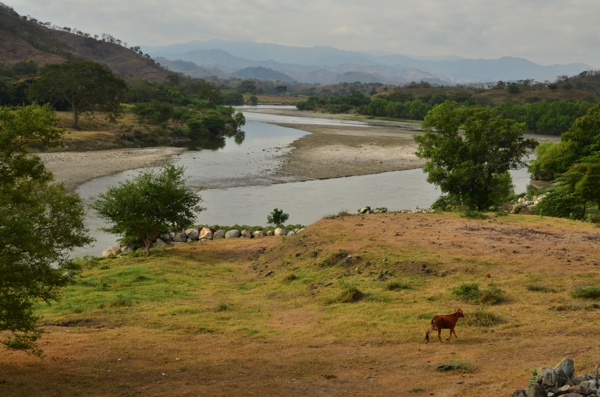 A lone cow and two cyclists enjoying the view of the river valley