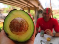 Fresh aguacate (avocado) for our fresh tortillas at a lunch stop, under a bridge, near a van, down by the river