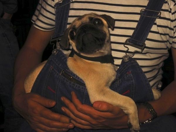 Carlos' puppy bjorn