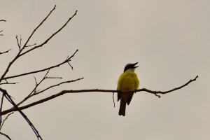 Identify this bird this bird (a little help Keith?).  He sang to us during 1st breakfast