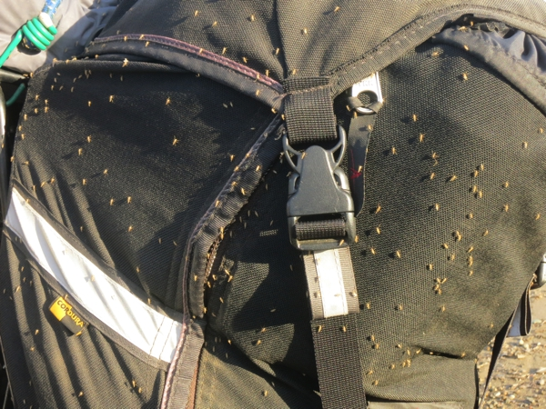 Luckily, the flies along the lake front were not the biting kind