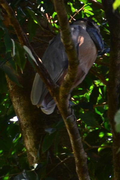 Big (Blue) Bird