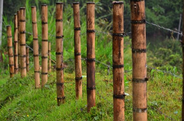 Palms, banana and bamboo thrive