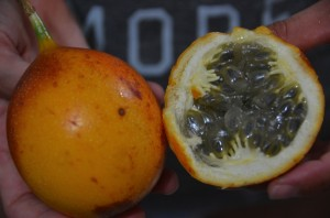 Granadilla snacks.  Sabrina's father insisted on us taking a few before leaving