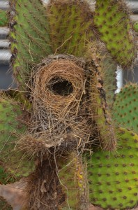 bird's nest in a cactus at the airport