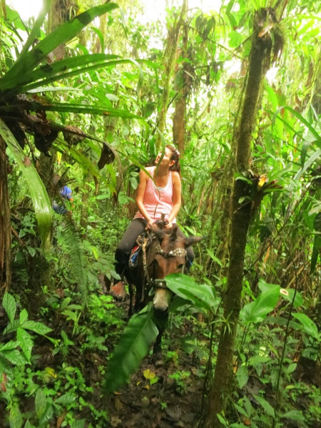 Laura looks for monkeys while her mule eats another banana leaf.  My mule housed a pile of bananas in our way through the village.