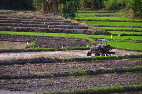 A farmer working the field