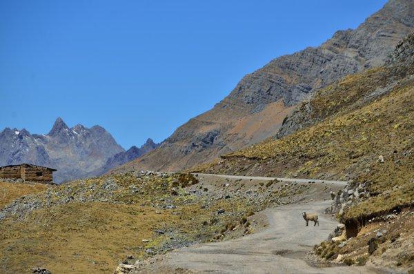 More sheep, llamas and horses than people