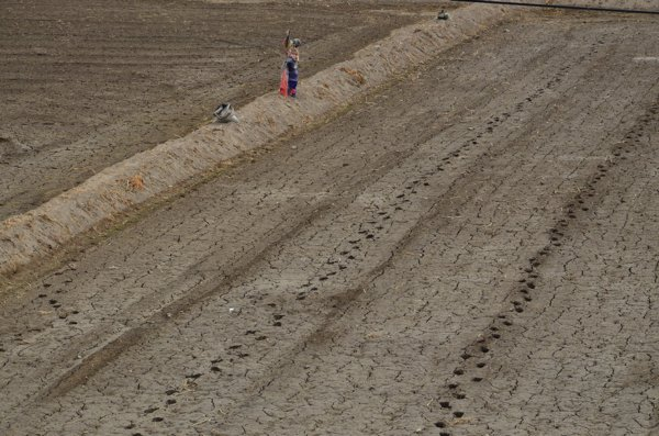 Footprints mark where the rows will be planted, while a scarecrow stands guard.
