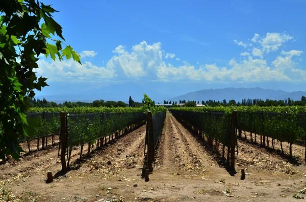 Passing vineyards as we leave Mendoza.