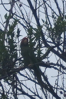 Wild parrots are everywhere. Cool! Until we realized the obnoxious racket they make in the night.