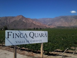 The Quara vineyard, from our wine last night.