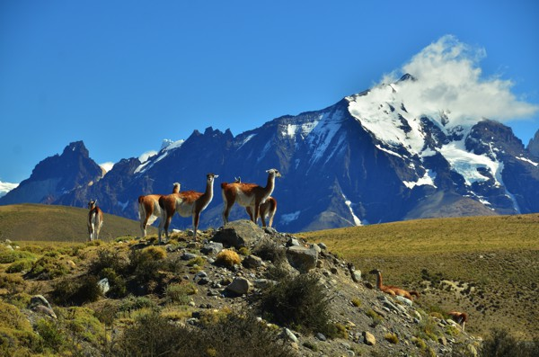 Even the guanaco are admiring the view.