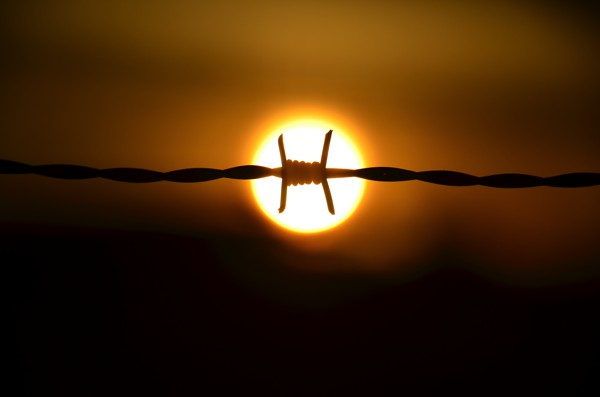 sunset on the wire