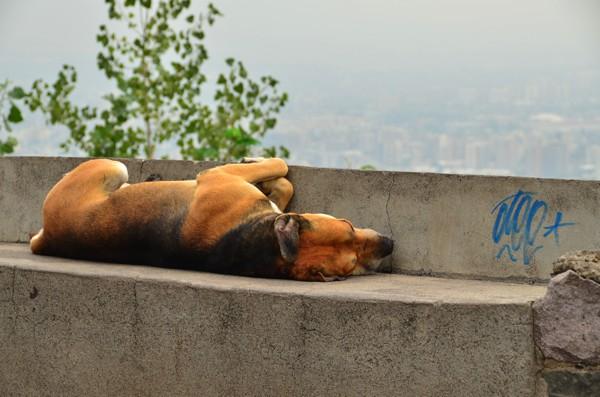 Dog sleeping on a park bench.