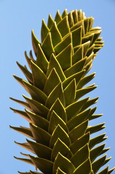 ...and a cactus up close.