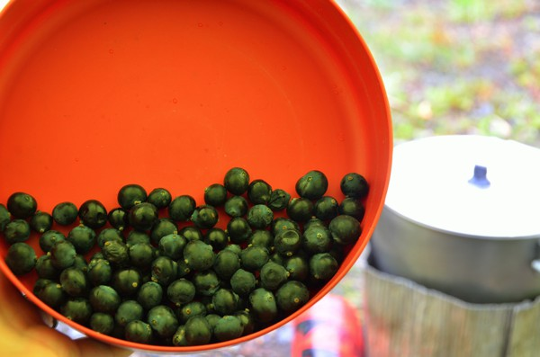 Wild Calafate berries. A legend tells that anyone who eats a Calafate berry will be certain to return to Patagonia.