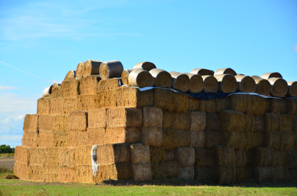 I used to have to stack hay bales in the summer. I'm glad I wasn't stacking hay in Poland.