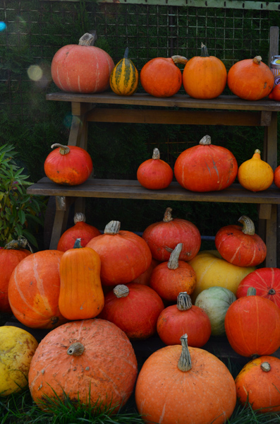 Nothing says Fall is here like a pile o' pumpkins!